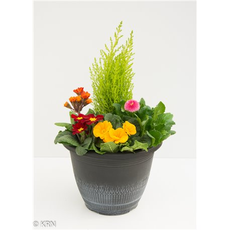 Planter Outdoor Wheat 28cm x 1