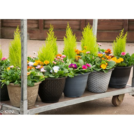 Planter Outdoor Mixed Shelf 28cm x 10