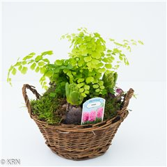 Hyacinth Basket 3 bulbs and fern 15cm