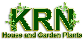 KRN House and Garden Plants
